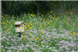 A wooden bluebird house is posted in a field of purple and yellow wildflowers