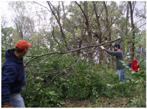 Men work to cut down limbs off trees