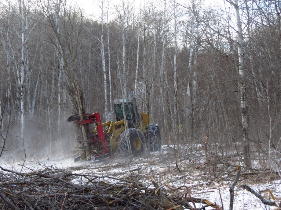A feller buncher is used to cut woody material.