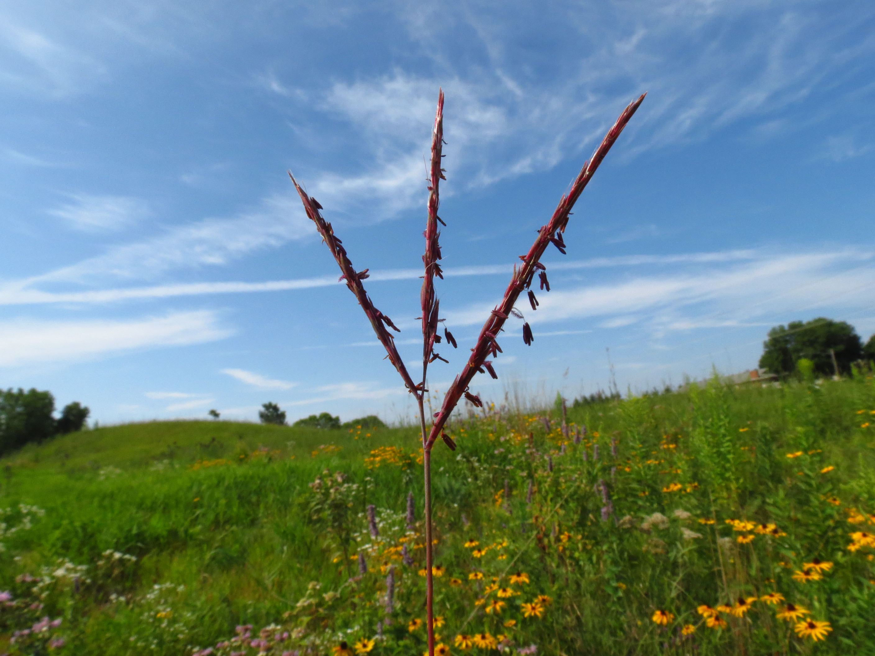 Alimag prairie - big blue in prairie