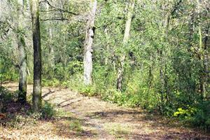 Woodland at Terrace Oaks__thumb.jpg